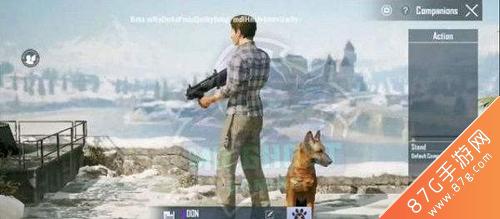 和平精英宠物狗怎么获得 新赛季宠物获取攻略