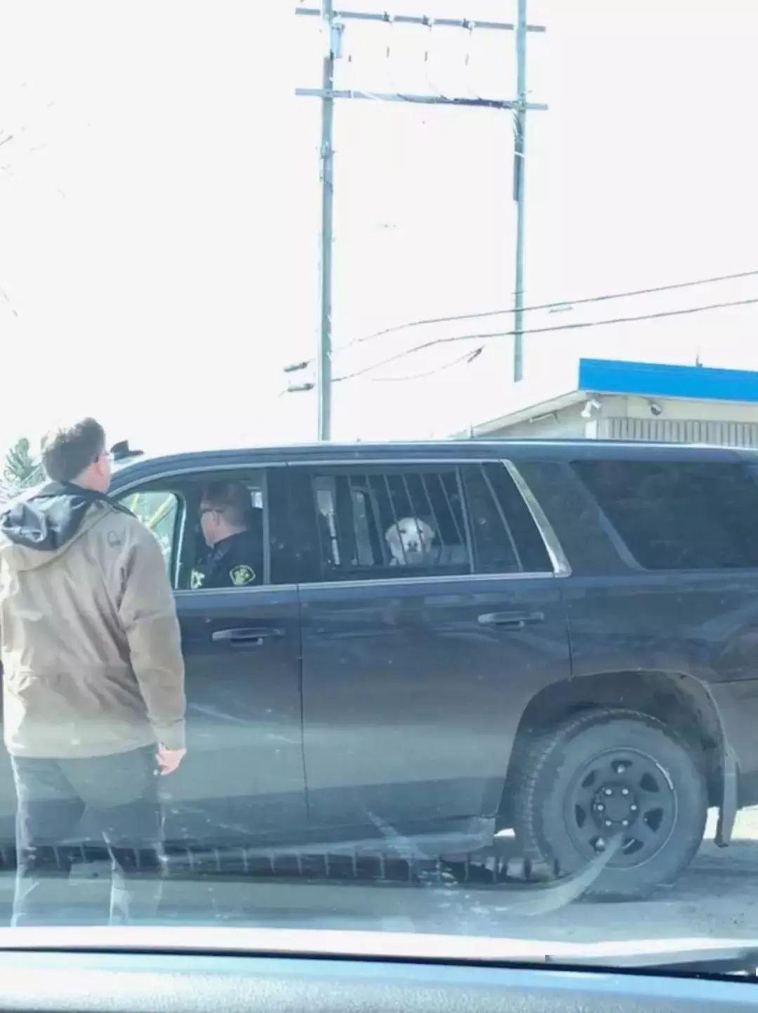 铲屎官接到警察的电话,说她家狗子犯事被捕了,要她去领狗