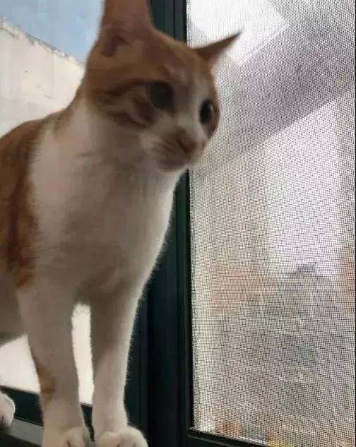 """我家猫得罪了一只记仇的黑鸟后,每天隔着窗户""""被喷屎"""""""