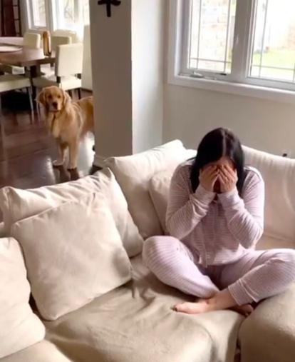 网友假哭测试狗狗,没想到狗狗的举动让她真的哭了