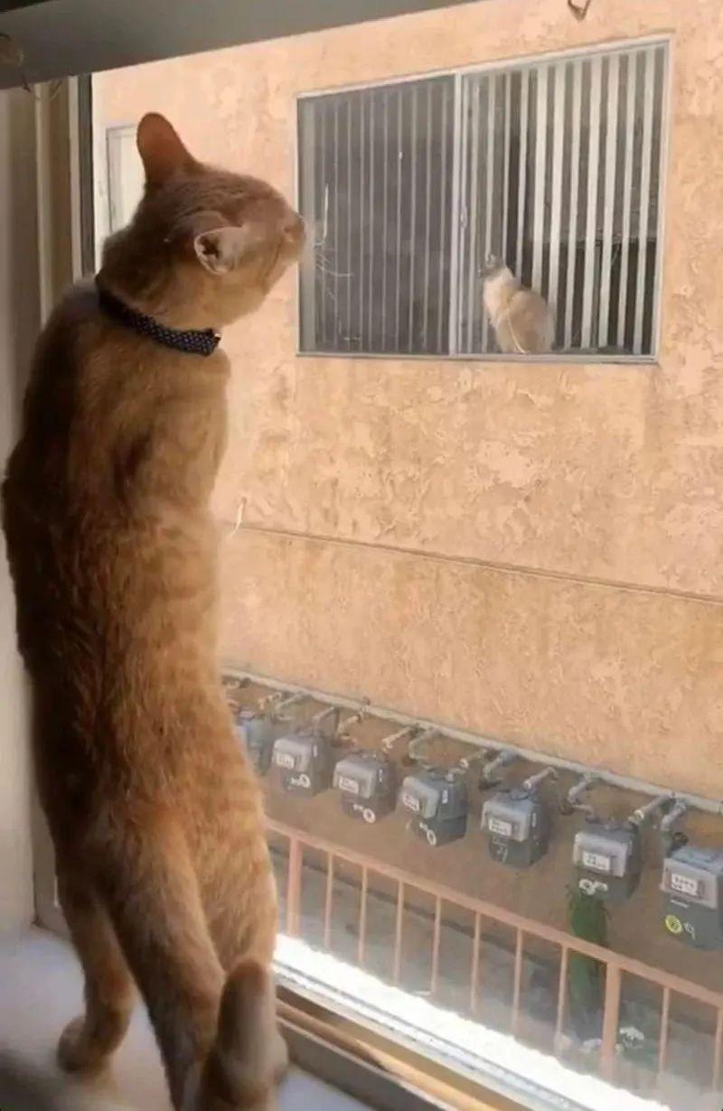 """""""说起谈恋爱,我连猫都不如…"""""""