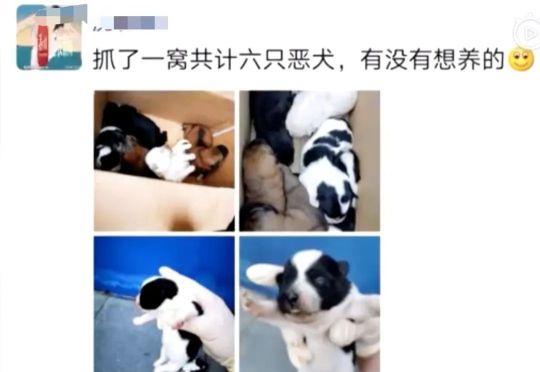 群众报警称有多只恶犬咬人,警察赶到后一脸懵逼