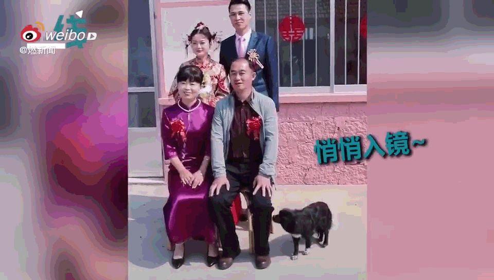 家人合影的时候,狗子蹑手蹑脚地走过来:我也要照相!