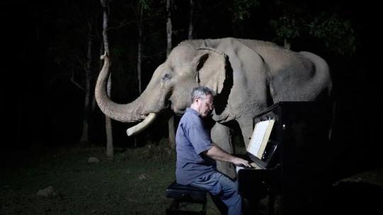 """59岁钢琴师在森林连开82场""""无人""""音乐会"""