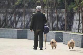 百万遗产,湖北大爷却选择留给了宠物