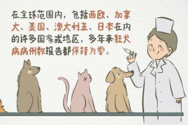在国外被狗咬伤,医生却拒绝为我打狂犬疫苗