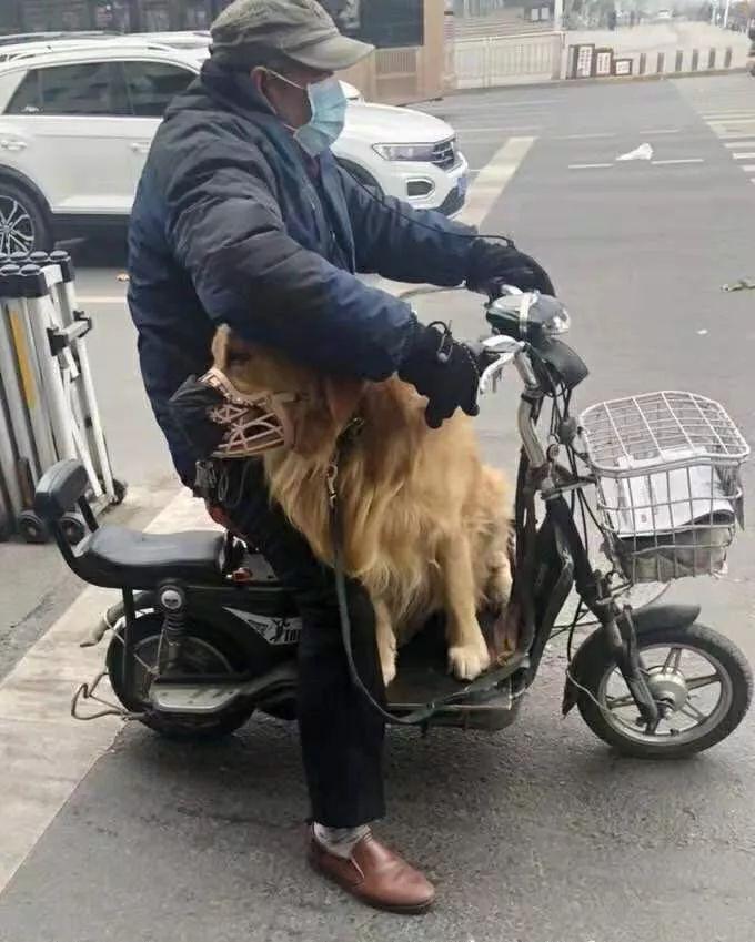 """为了响应一盔一带政策,大爷用""""饭盆""""给狗子做了个头盔"""