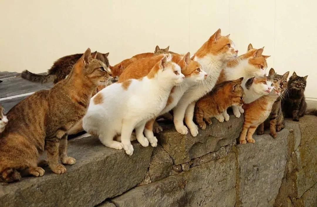 """日本""""猫岛""""被投毒4年,活下来不到1/3,凶手终于找到了!"""