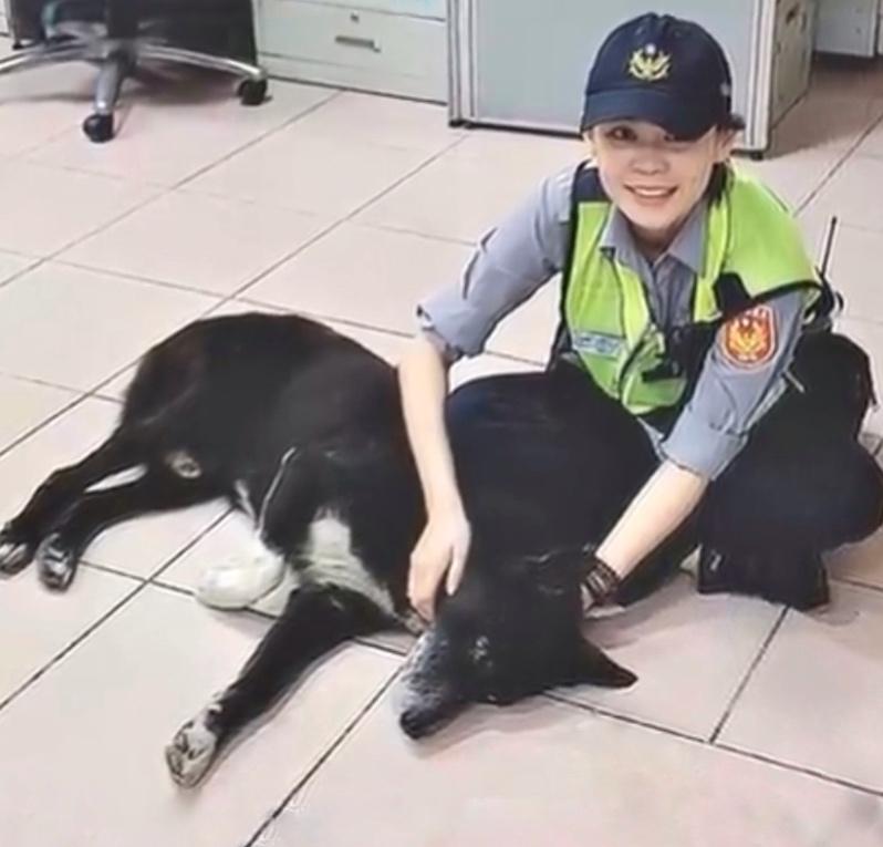 流浪狗每晚来警局睡觉,但天不亮就要离开,警察偷偷跟踪后发现…