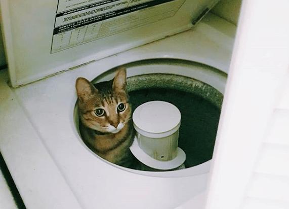 """因为一时疏忽,我亲手""""杀""""了我的猫"""