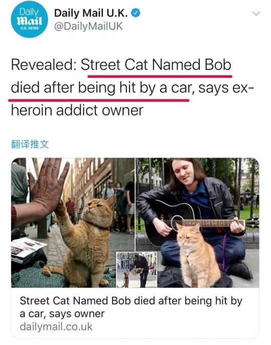 流浪猫鲍勃并非老死,而是死于车祸!