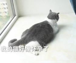 网友家的小母猫,怀了绝育公猫的娃?
