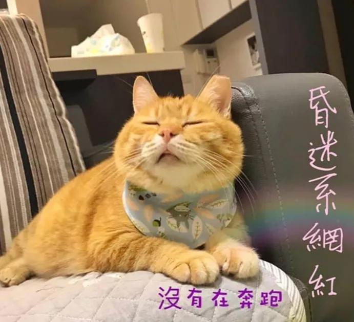 网友家的小胖橘能吃又能睡,每天都要睡足20个小时!